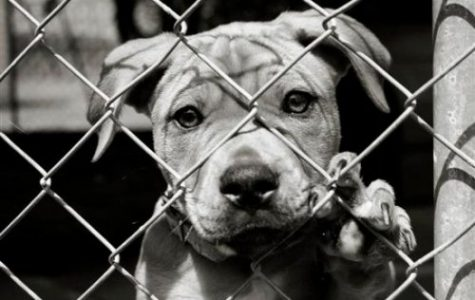 Harsher Laws Against Animal Abuse