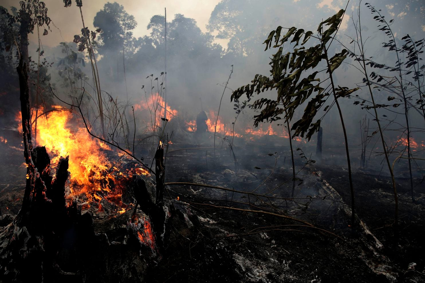Fires burn and destroy trees in the Brazilian Amazon Rainforest near the road to the Jacundá National Forest. The National Institute for Space Research has reported around 87,000 forest fires in Brazil during the first 8 months of 2019. NASA confirmed this and says this has been the most active year for fires in the Amazon for almost a decade.