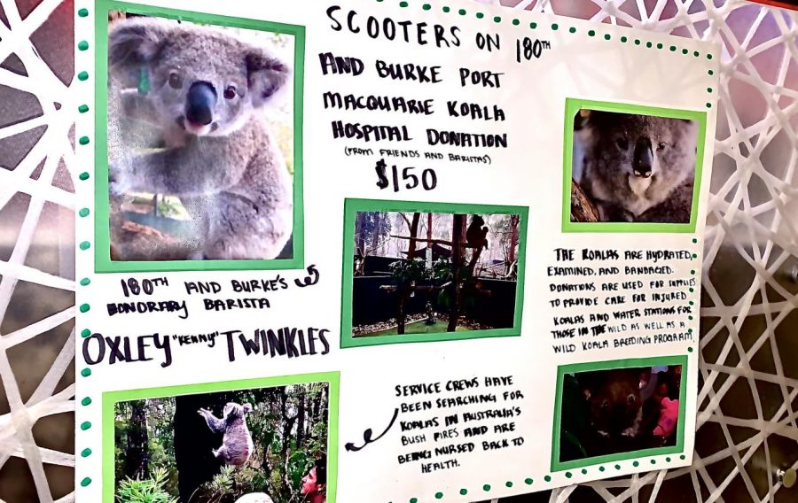 "A poster featuring one of the koalas up for adoption, Oxley ""Kenny"" Twinkles, hangs at the Scooter's Coffee senior Olivia Oeth works at. Made by Oeth herself, it provides information on what her friends and co-workers have worked together to contribute for. ""Olivia has always cared about the environment,"" senior donor Logan Berggren said. ""She'll always find ways to help it in anyway she can."""