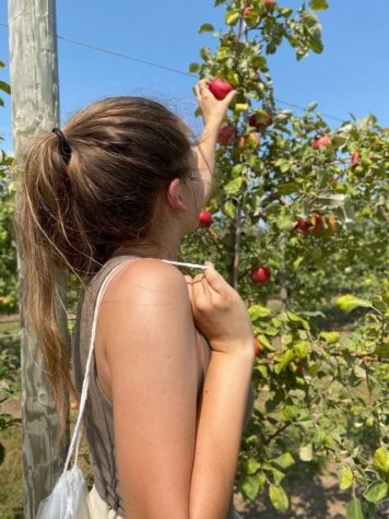 """Sophomore Tayler Hand picks an apple at Vala's Pumpkin Patch and Apple Orchard over Labor Day weekend. The Apple Festival allowed for Vala's to have a sort of """"test run"""" before the rest of their fall season. """"My favorite part was being able to do something that feels normal in a world of craziness,"""" Hand said. """"It is similar to the pumpkin picking in which you drive out to the fields on the hayrack ride."""""""