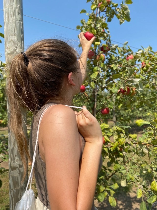 Sophomore+Tayler+Hand+picks+an+apple+at+Vala%E2%80%99s+Pumpkin+Patch+and+Apple+Orchard+over+Labor+Day+weekend.+The+Apple+Festival+allowed+for+Vala%E2%80%99s+to+have+a+sort+of+%E2%80%9Ctest+run%E2%80%9D+before+the+rest+of+their+fall+season.+%E2%80%9CMy+favorite+part+was+being+able+to+do+something+that+feels+normal+in+a+world+of+craziness%2C%E2%80%9D+Hand+said.+%E2%80%9CIt+is+similar+to+the+pumpkin+picking+in+which+you+drive+out+to+the+fields+on+the+hayrack+ride.%E2%80%9D